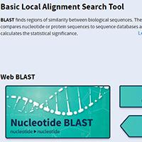 NCBI/ BLAST