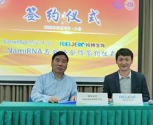 重磅丨锐博生物与NamiRNA研究平台达成战略合作伙伴关系